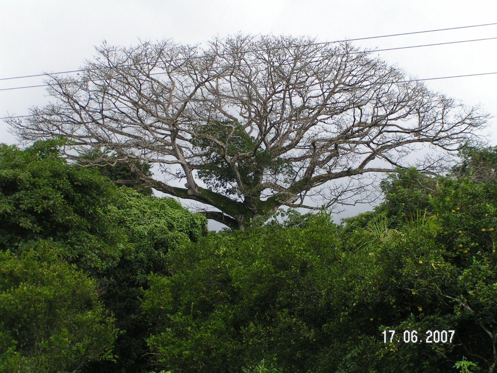 """Loi biodiversité : retrait du terme """"autochtone"""" mais des avancées pour les outre-mer"""