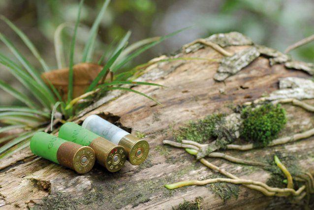 Egalité réelle : un permis de chasser en Guyane pour mieux contrôler la circulation d'armes à feu